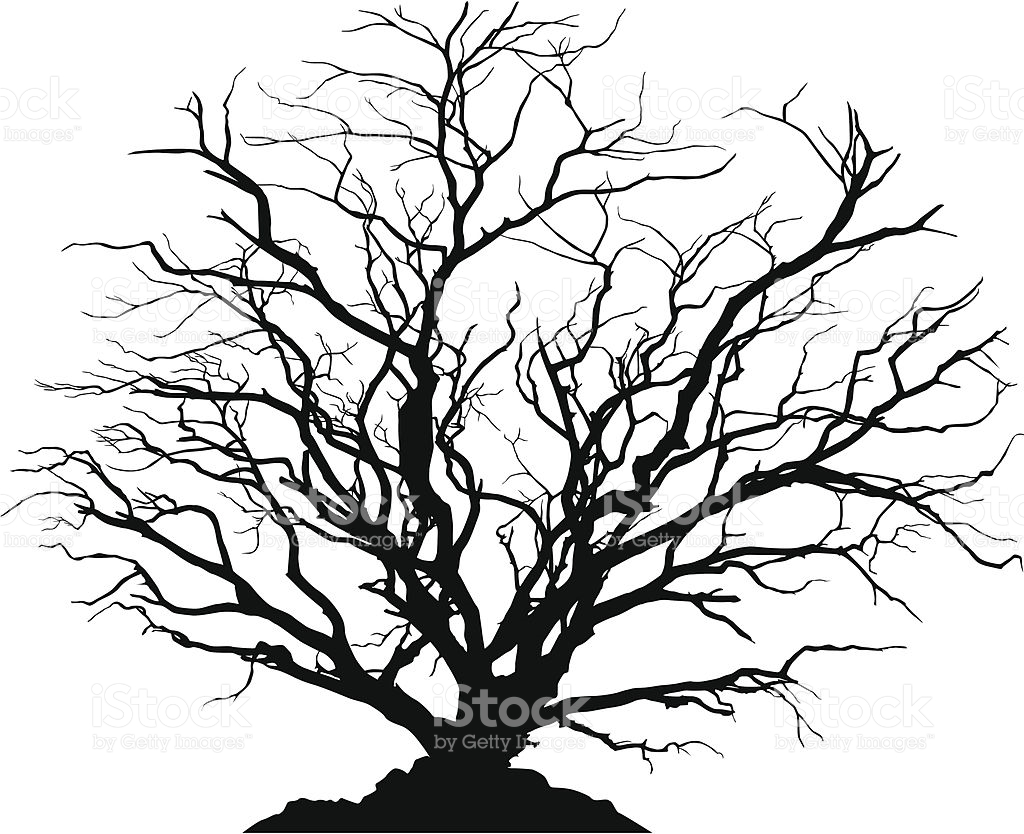 1024x834 Silhouette Of A Round Shaped Deciduous Tree With No Leaves. Ground