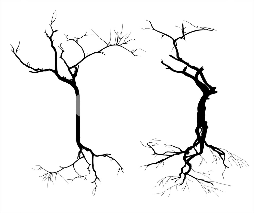 1000x838 Dead Trees Silhouette Royalty Free Stock Image