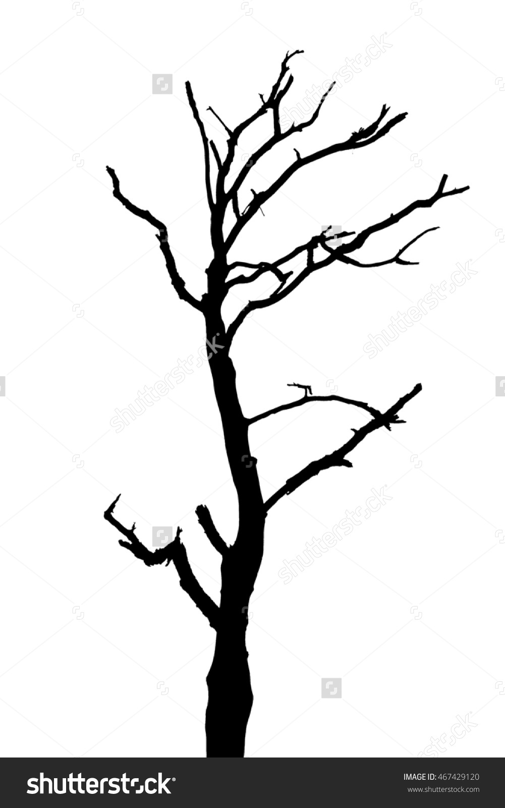 1001x1600 Tree Silhouette, Dry Tree Or Dead Tree On White On Background