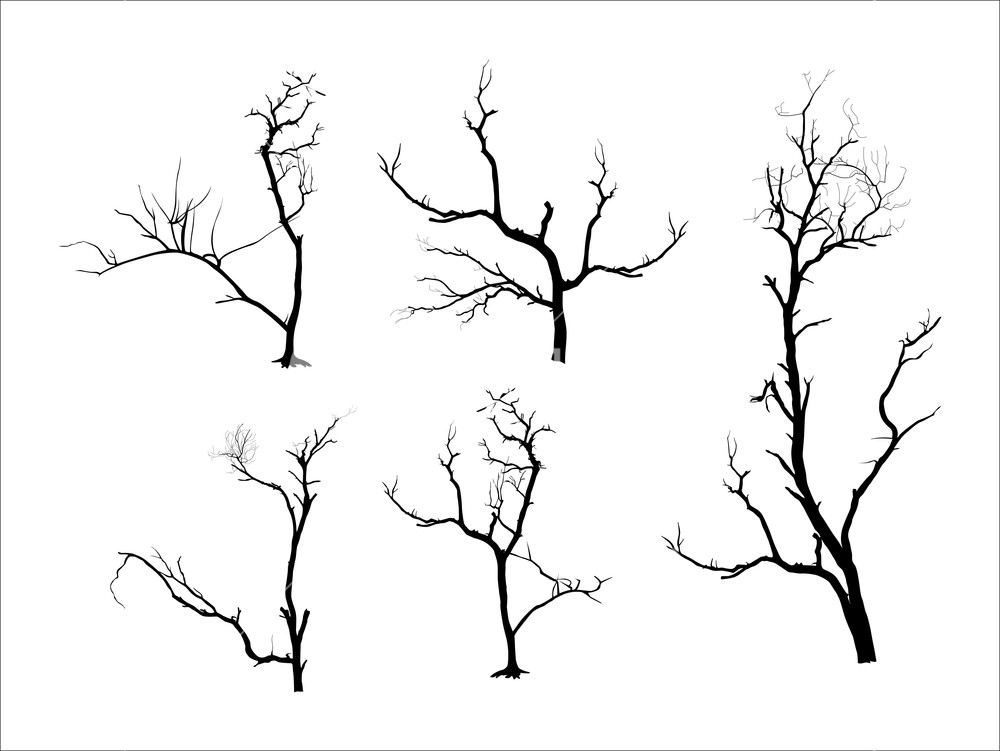 1000x751 Dead Tree Silhouettes Royalty Free Stock Image