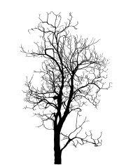 167x235 Dead Tree Silhouettes Vector Premium Clipart