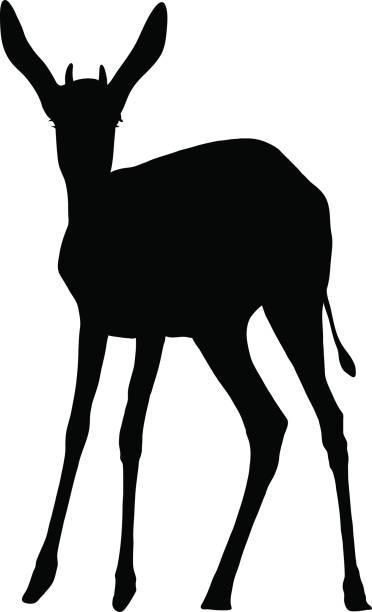 372x612 Springbok Clipart Dear Animal
