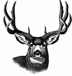 236x250 Mule Deer Clipart