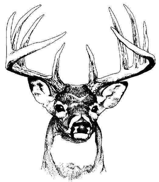 523x600 Whitetail Deer Clipart Black And White