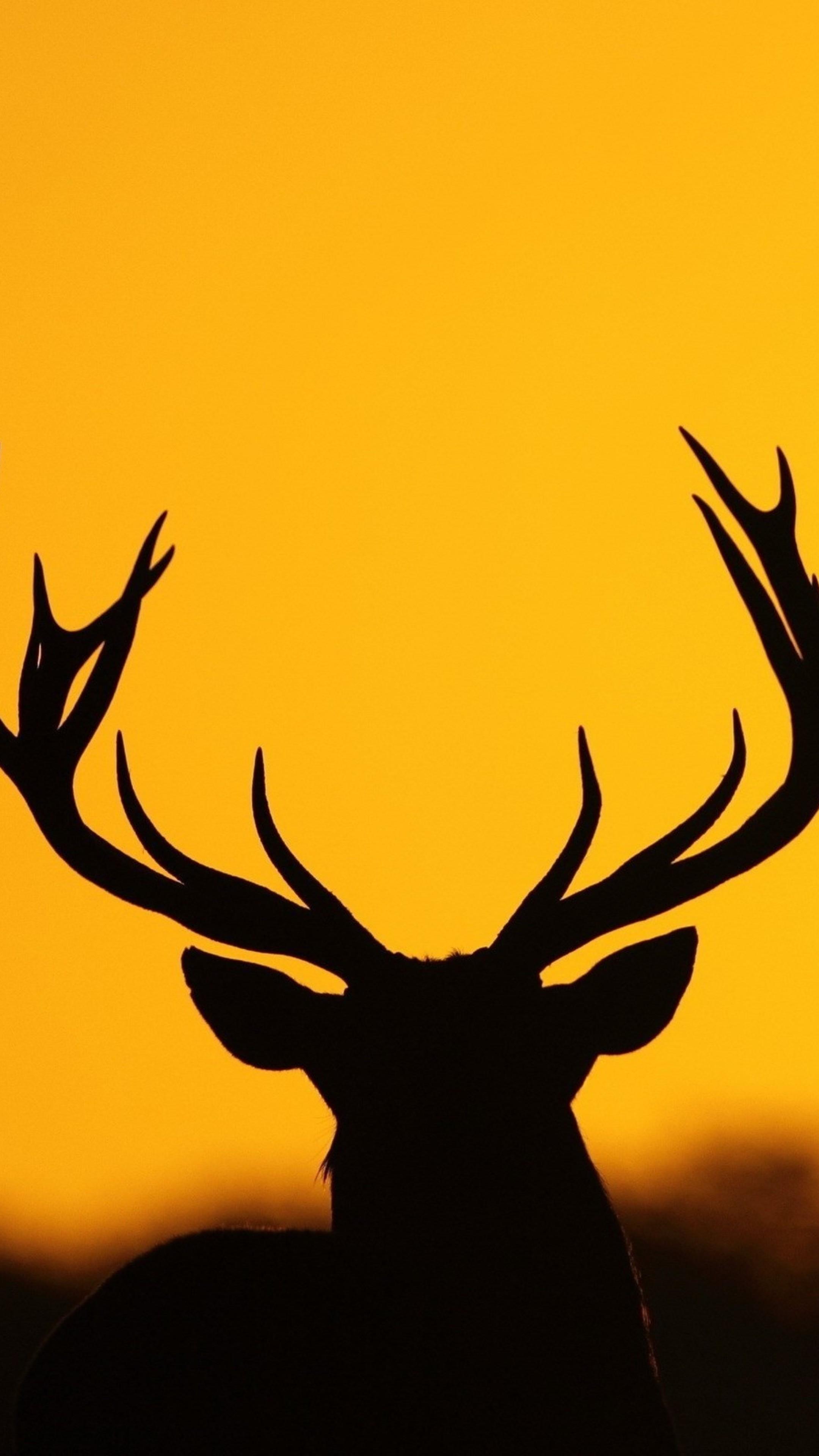2160x3840 Black Silhouette Of Deer Antlers Stock Vector Art More Images