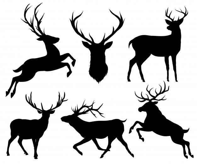 626x521 Deer Horns Vectors, Photos And Psd Files Free Download