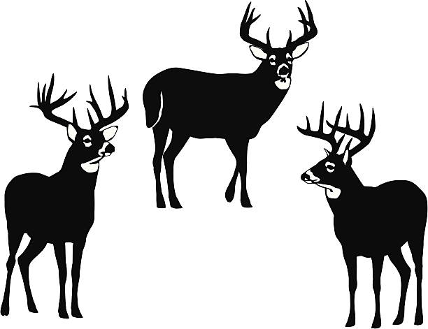 612x471 White Tailed Deer Clipart Vector