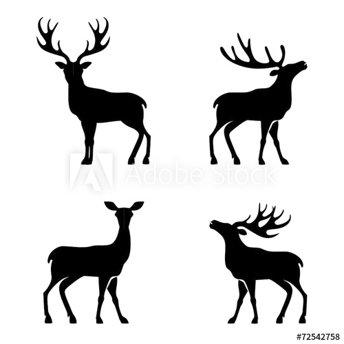 500x500 Deer Collection