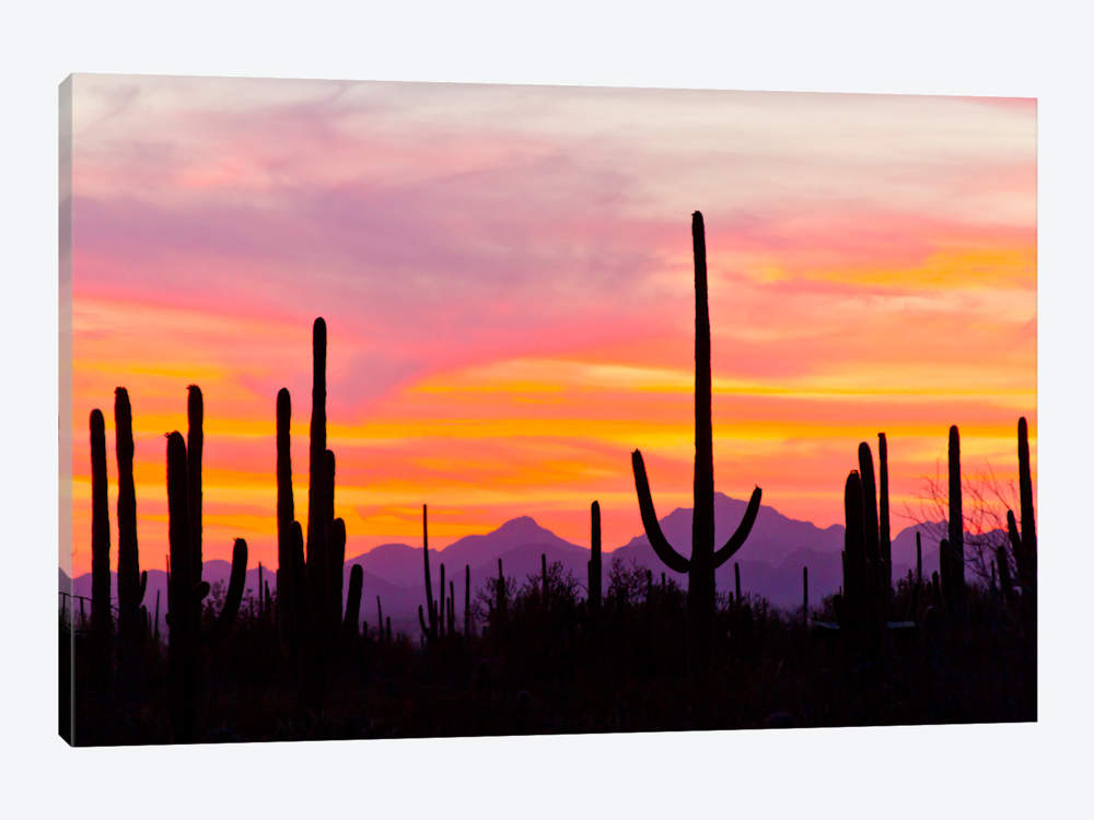 1000x750 Saguaro Cacti At Sunset I, Saguaro Natio Cathy Amp Gordon Illg