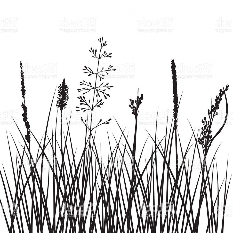 1228x1228 Grassy Black Vector Arenawp