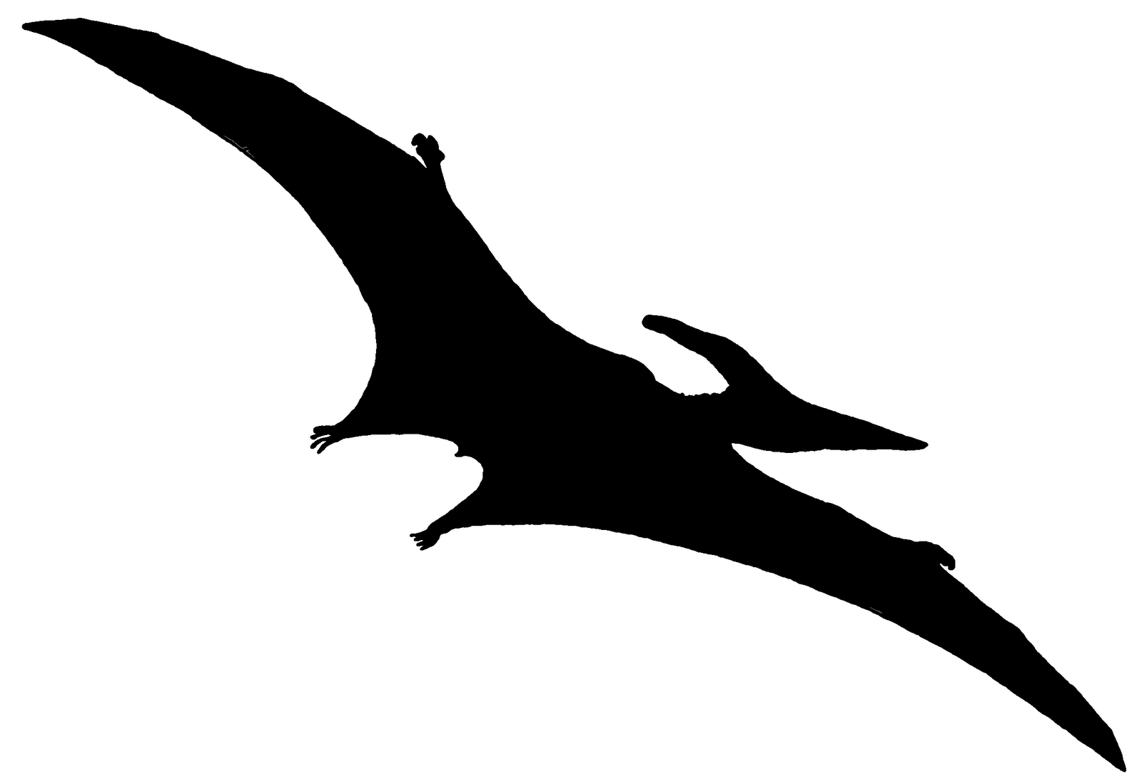 1600x1099 Pterodactyls Like Small Bird Tattoos Stencil Silhouette Vector