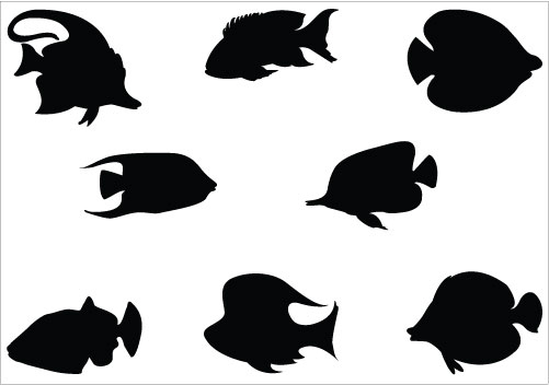 501x352 Sea Animals And Scuba Diver Silhouette Turtle Tropical Fish
