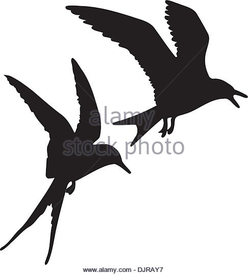 486x540 White Tern Stock Vector Images