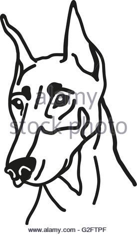 275x470 Silhouette Of A Dog Head Doberman Pinscher. Portrait Pedigree