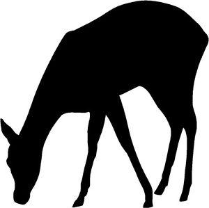 300x299 Deer Doe Fawn