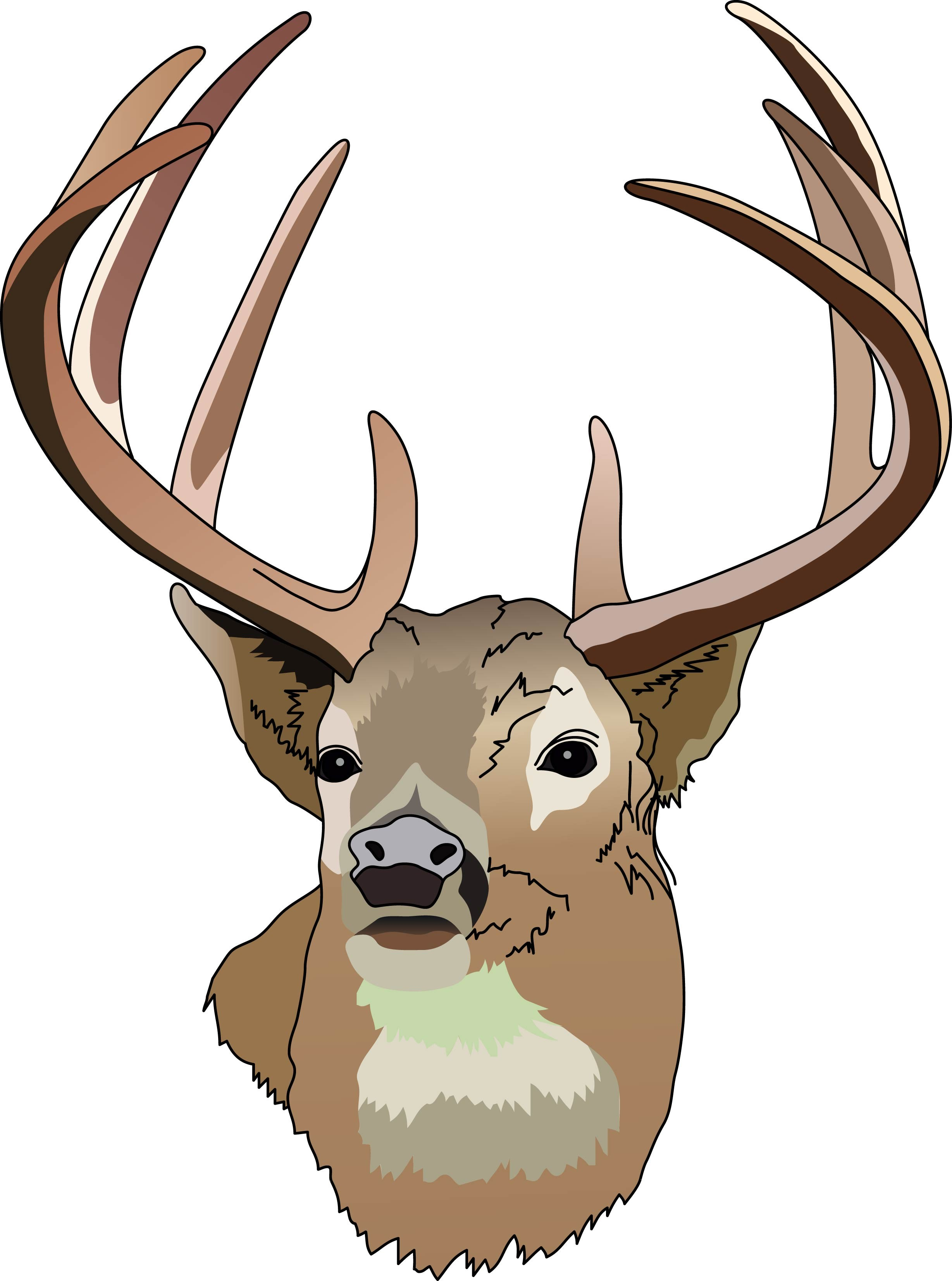 2457x3305 Wide Antlers Cliparts 275352
