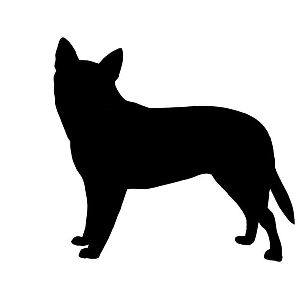612x612 Australian Cattle Dog Acd Australian Cattle Dog