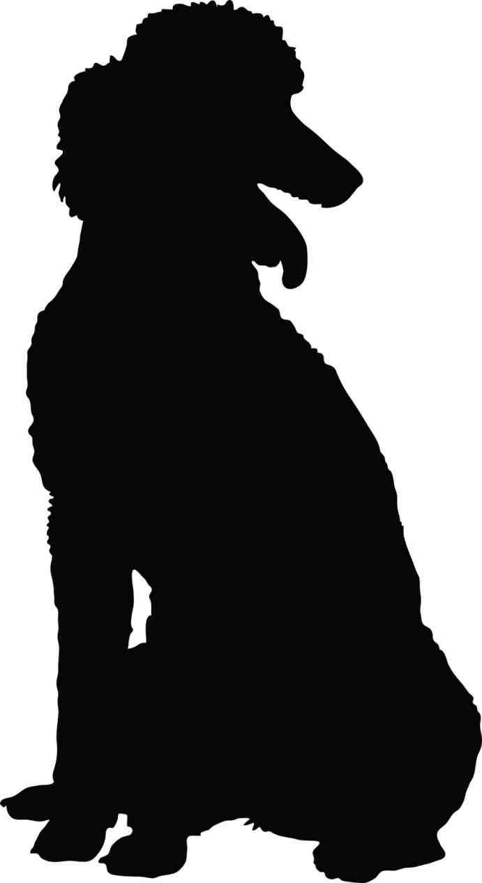 691x1264 Chinacps Poodle Poodle Face Silhouette Silhouette Clipart Chinacps
