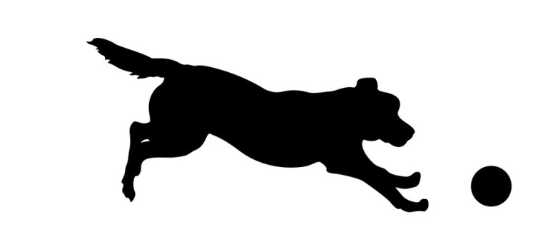768x353 Dog Running Silhouettes Dover Shores Pet Care Center