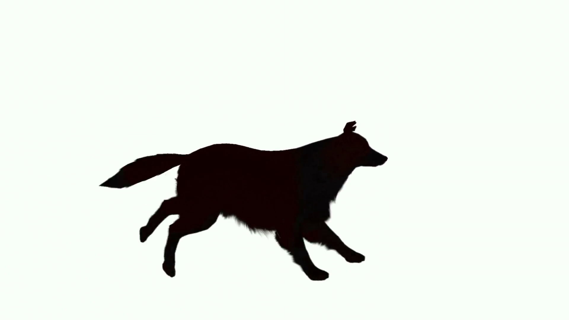 1920x1080 Silhouette Of Dog Running Across The Screen Motion Background