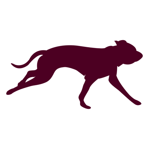 512x512 Dog Running Sequence 2