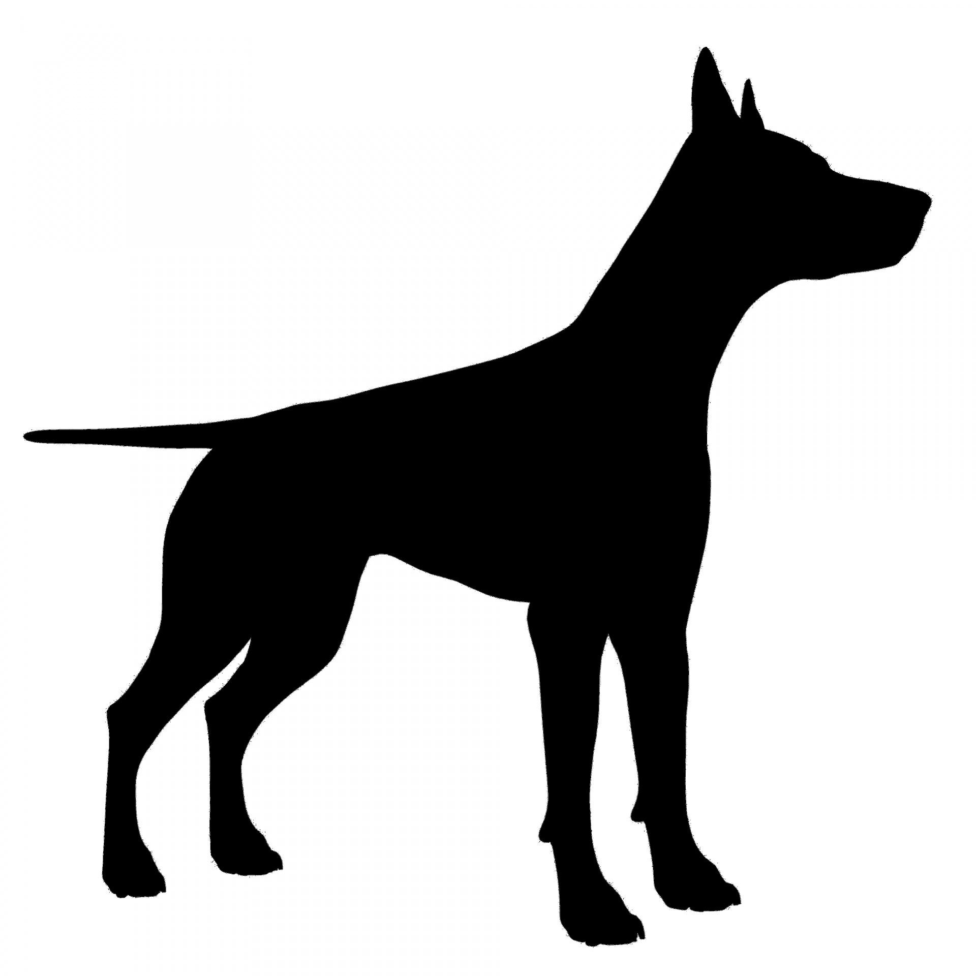 1920x1920 Dog Silhouette Free Stock Photo