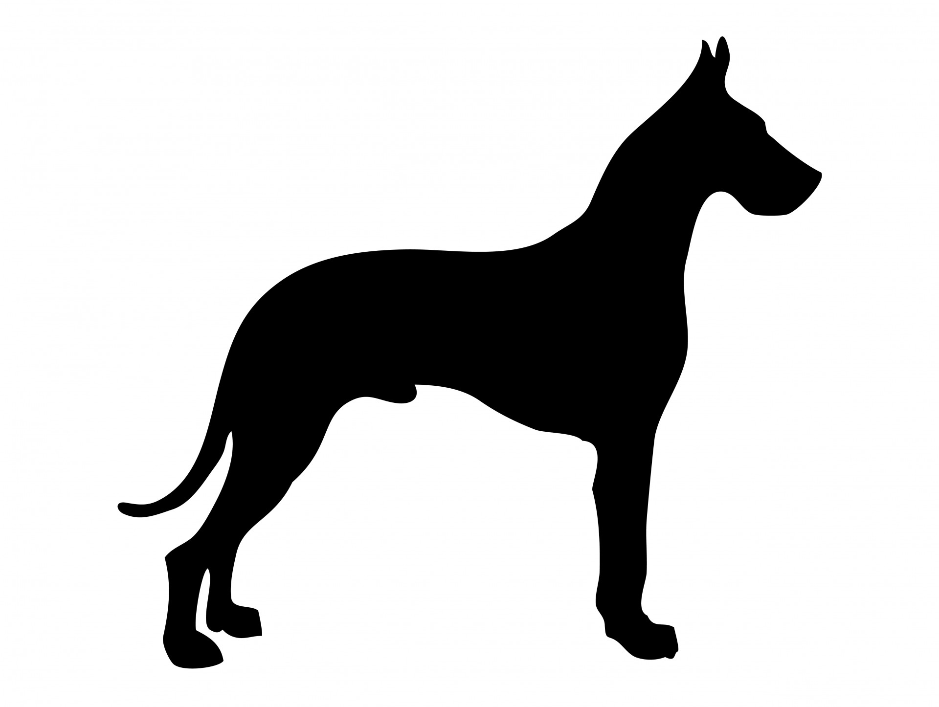 1920x1446 Dog Silhouette Great Dane Free Stock Photo