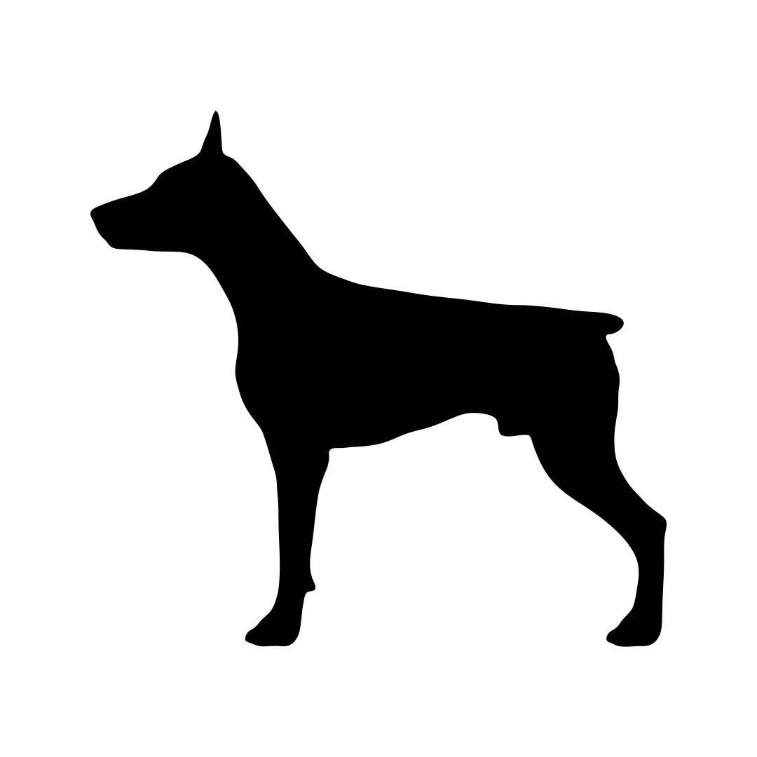 1080x1080 Doberman Svg Dog Animal Graphics Dxf Eps Png Cdr Ai Pdf Vector Art