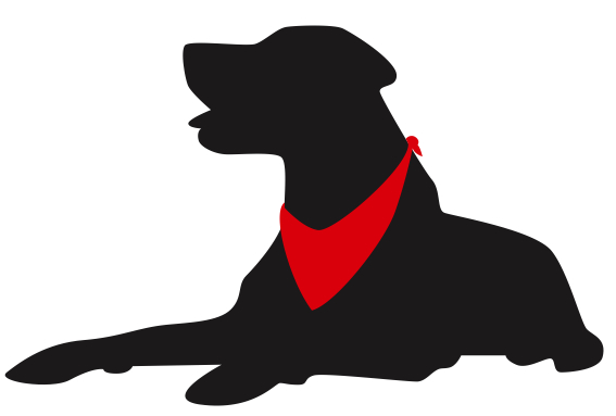 567x383 Red Bandana Pet Services Llc Dog Walking And Pet Sitting Services