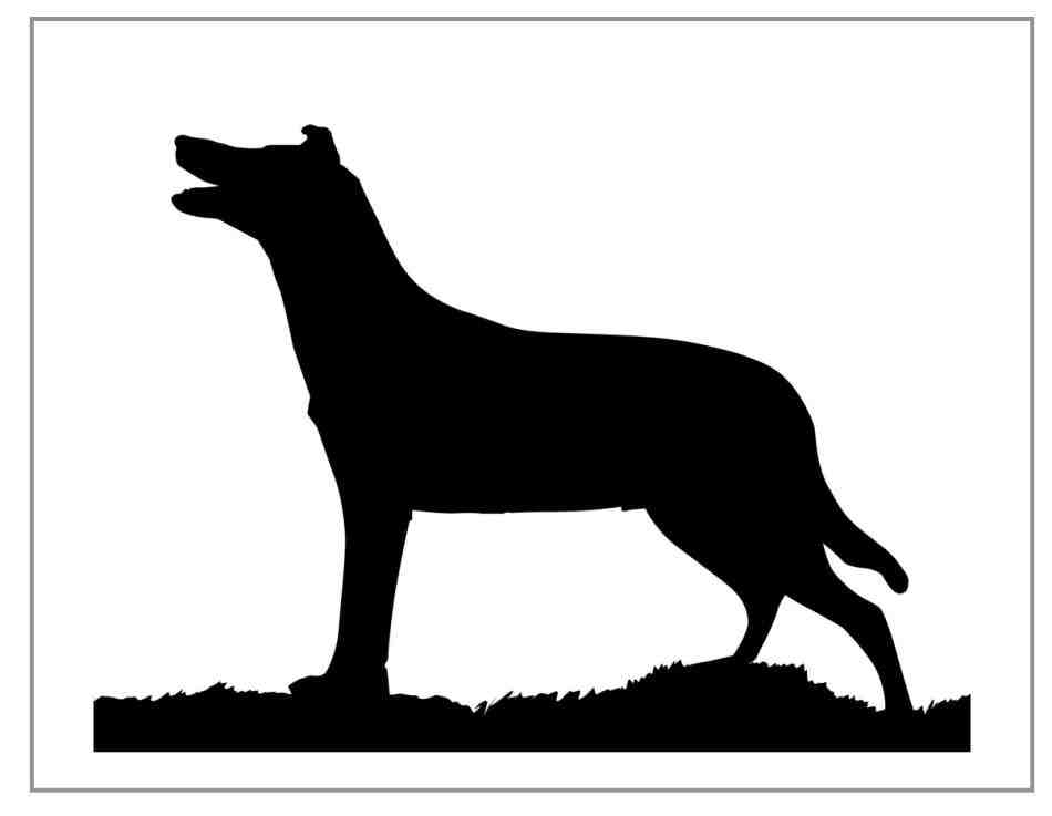 950x737 Sitting Border Collie Silhouette Animalsee.club