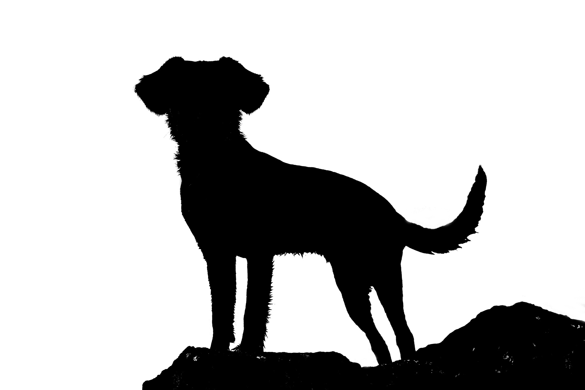 1920x1280 Silhouette Of Dog Free Stock Photo