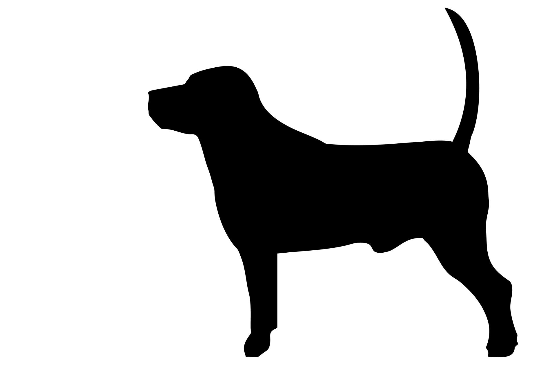 1920x1280 Dog Black Silhouette Free Stock Photo
