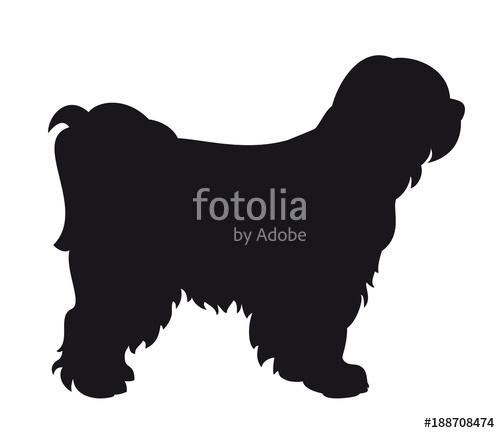 500x433 Tibet Terrier Dog