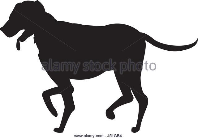 640x450 Dog Walking Sign Stock Photos Amp Dog Walking Sign Stock Images