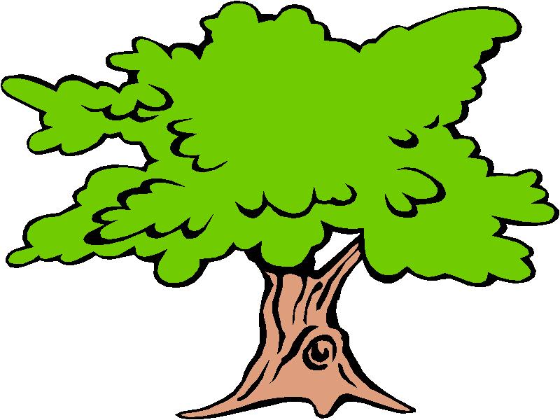 800x600 Pix For Dogwood Tree Flower Drawing