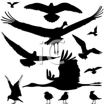 350x350 Clip Art Water Bird Birds Clipart