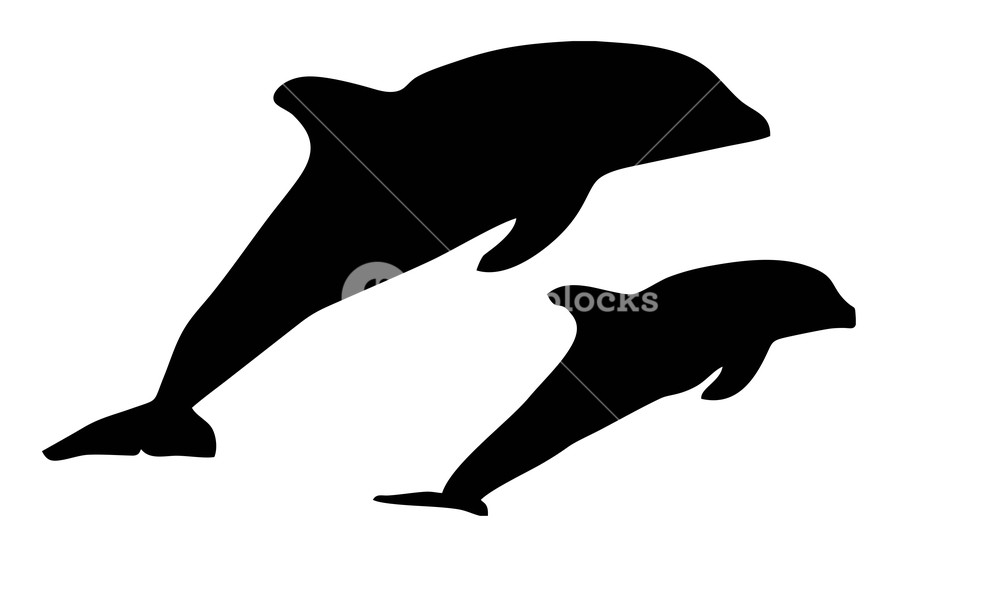 1000x602 Dolphin Silhouette On A White Background Royalty Free Stock Image