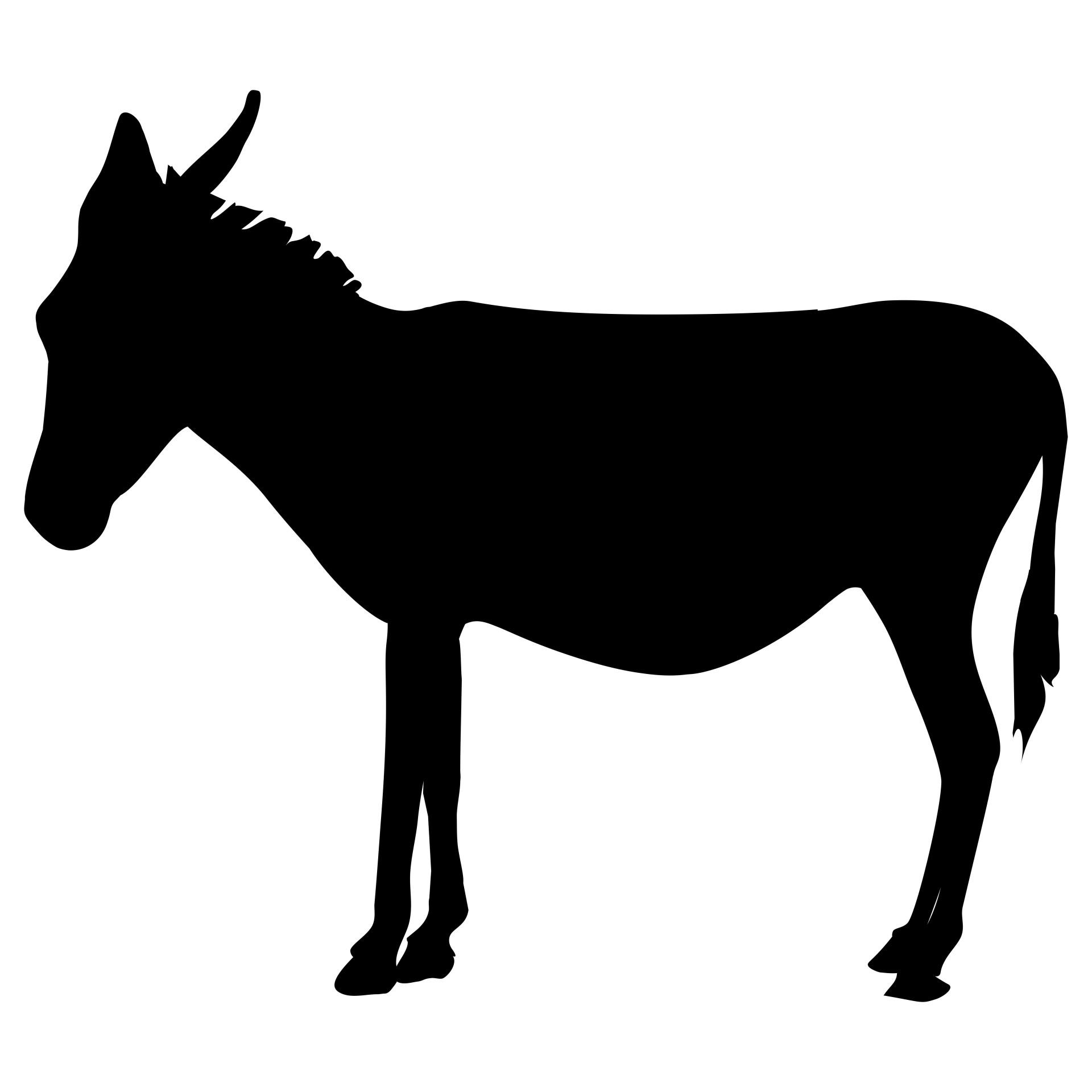 1920x1920 Donkey Free Stock Photo