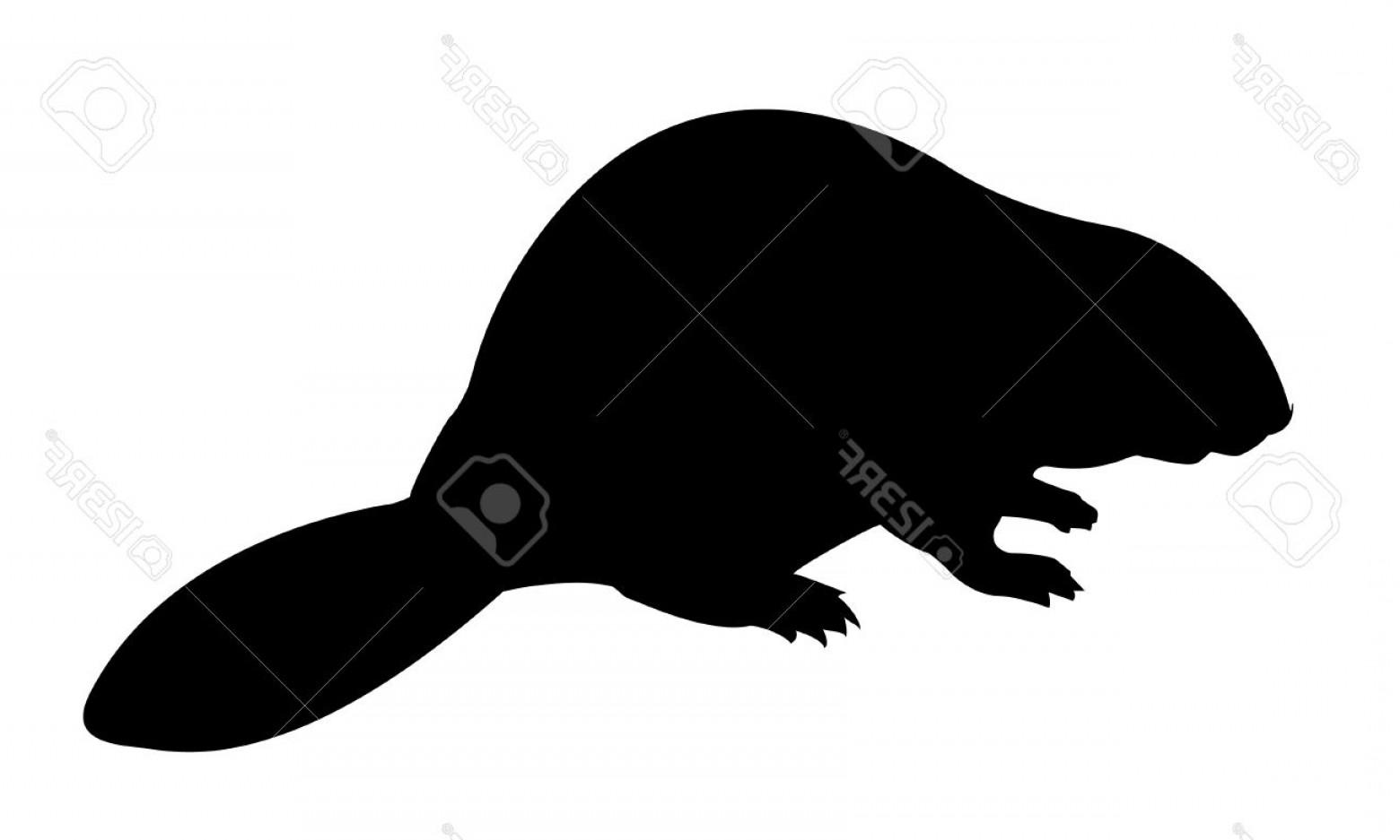 1560x937 Vector Silhouette Beaver Createmepink