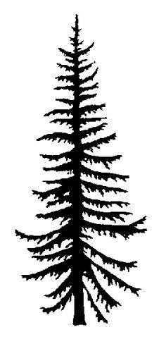 236x498 Evergreen Silhouette Rocky Mountain Douglas Fir