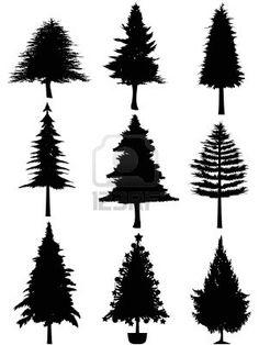 236x314 Fir Tree Black And White