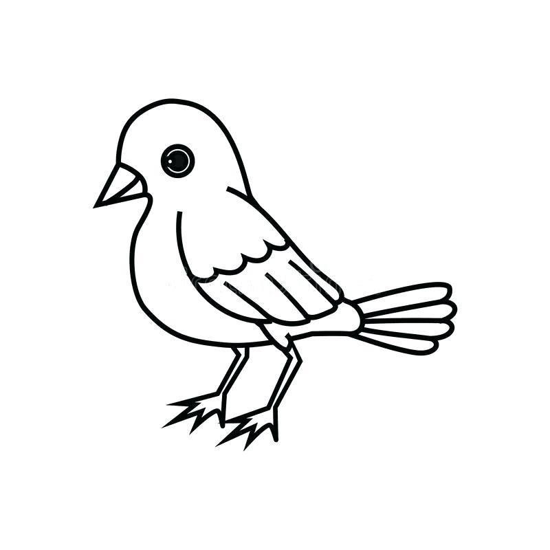 800x800 Bird Silhouette Free Vector Download Free Vector For Bird