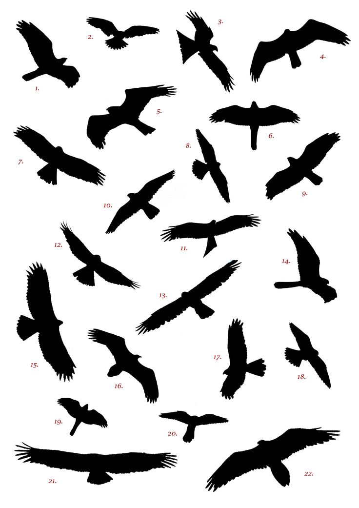 Dove Silhouette Tattoos