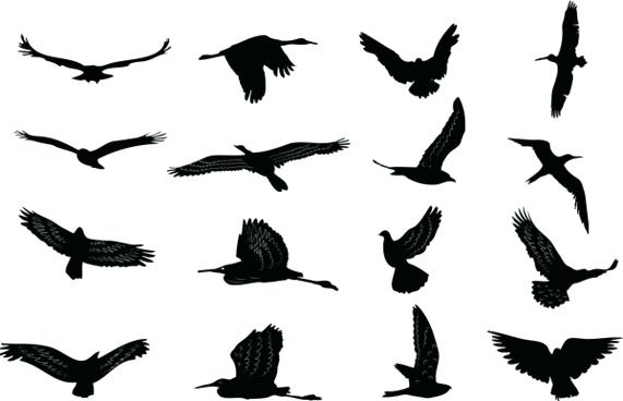 571x368 Bird Silhouette Free Vector Download Free Vector For Bird
