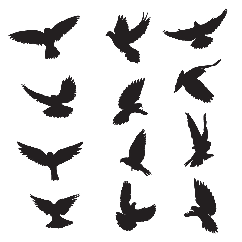 800x800 Set Of Silhouettes Of Doves
