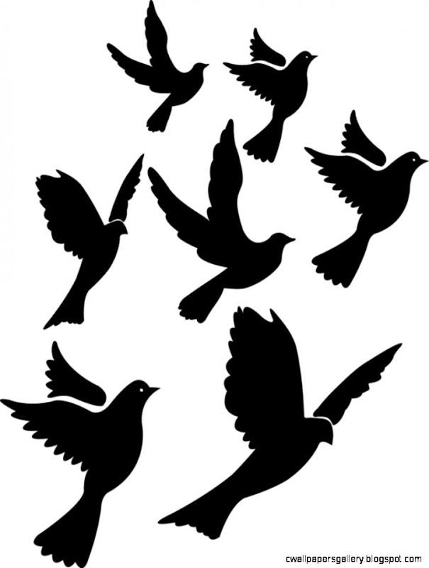 605x800 Single Flying Bird Silhouette Dove Wallpapers Gallery