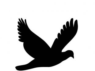 310x233 Flying Dove Silhouette Free Vectors Ui Download