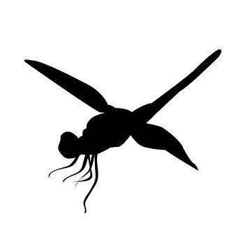 341x340 Free Silhouette Vector Dragonfly, Up