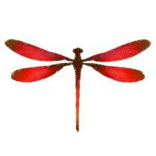 225x225 Red Dragonfly Drawing T Shirts Dragonfly Drawing