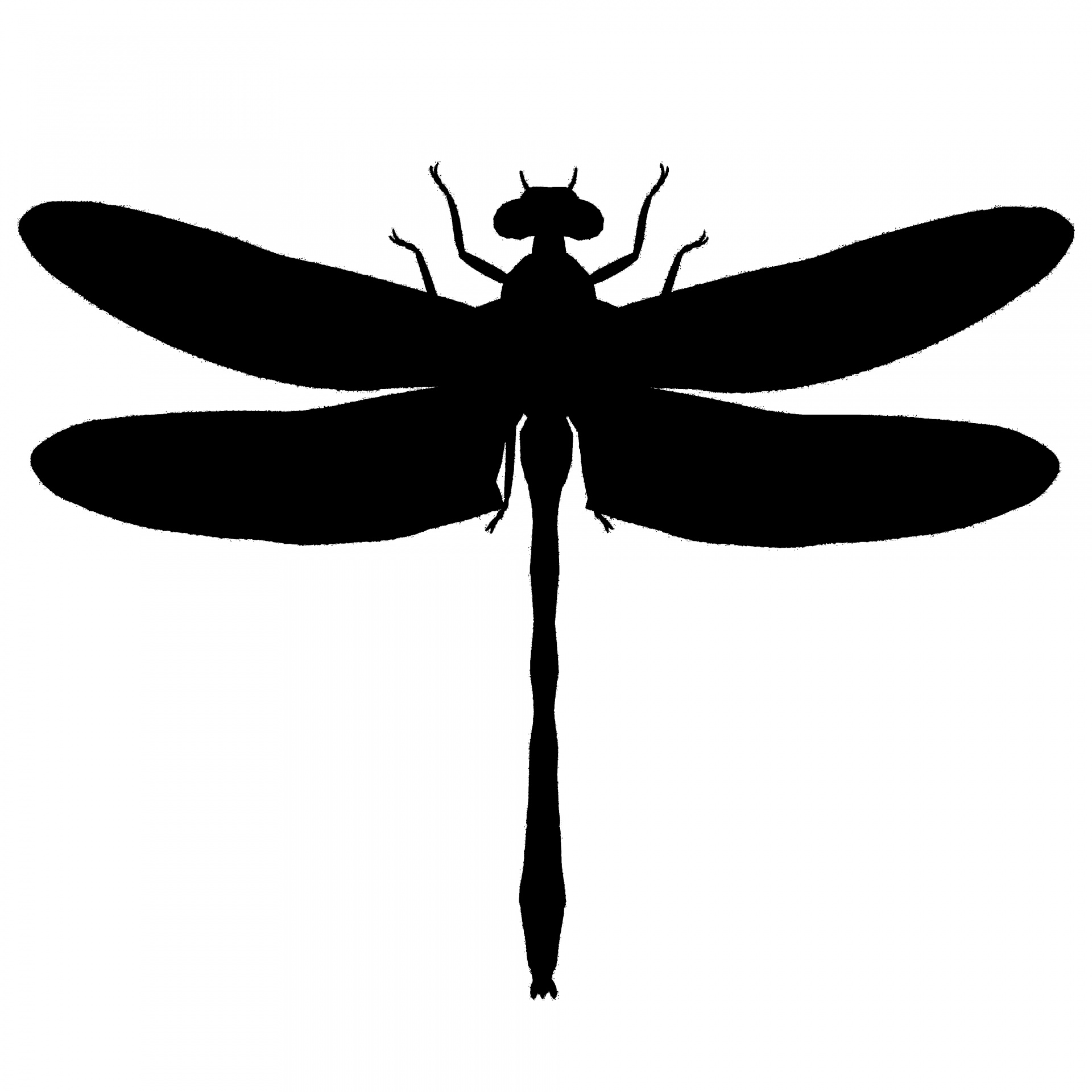 1920x1920 Dragonfly Ii Free Stock Photo